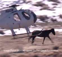 Don't fund the bloody wild horse roundups!